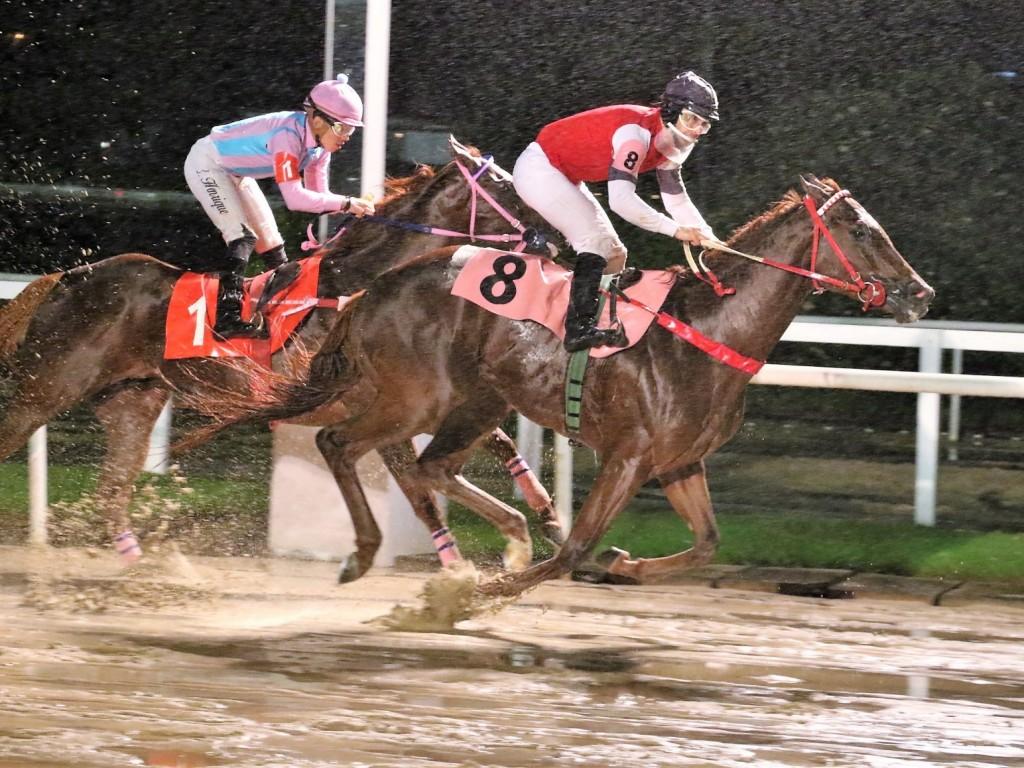 Debaixo de chuva, American Bull vence o Clássico São Francisco Xavier (L)
