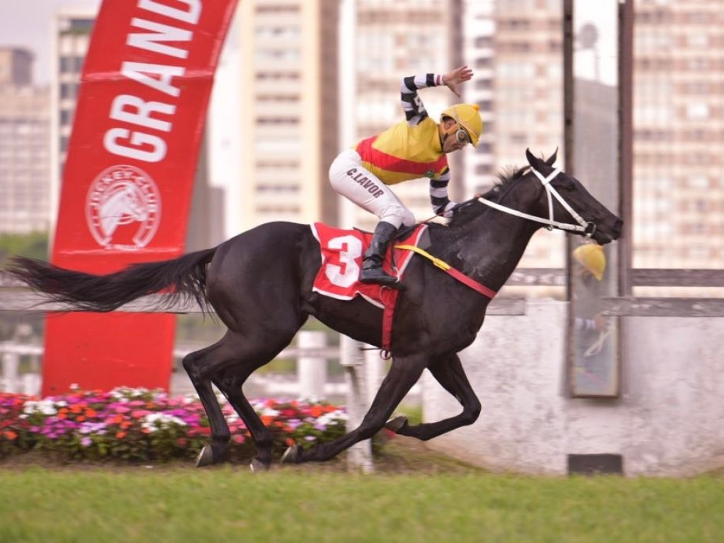 Não Da Mais comanda dobrada do Haras Phillipson no Derby Paulista – Grupo Abril